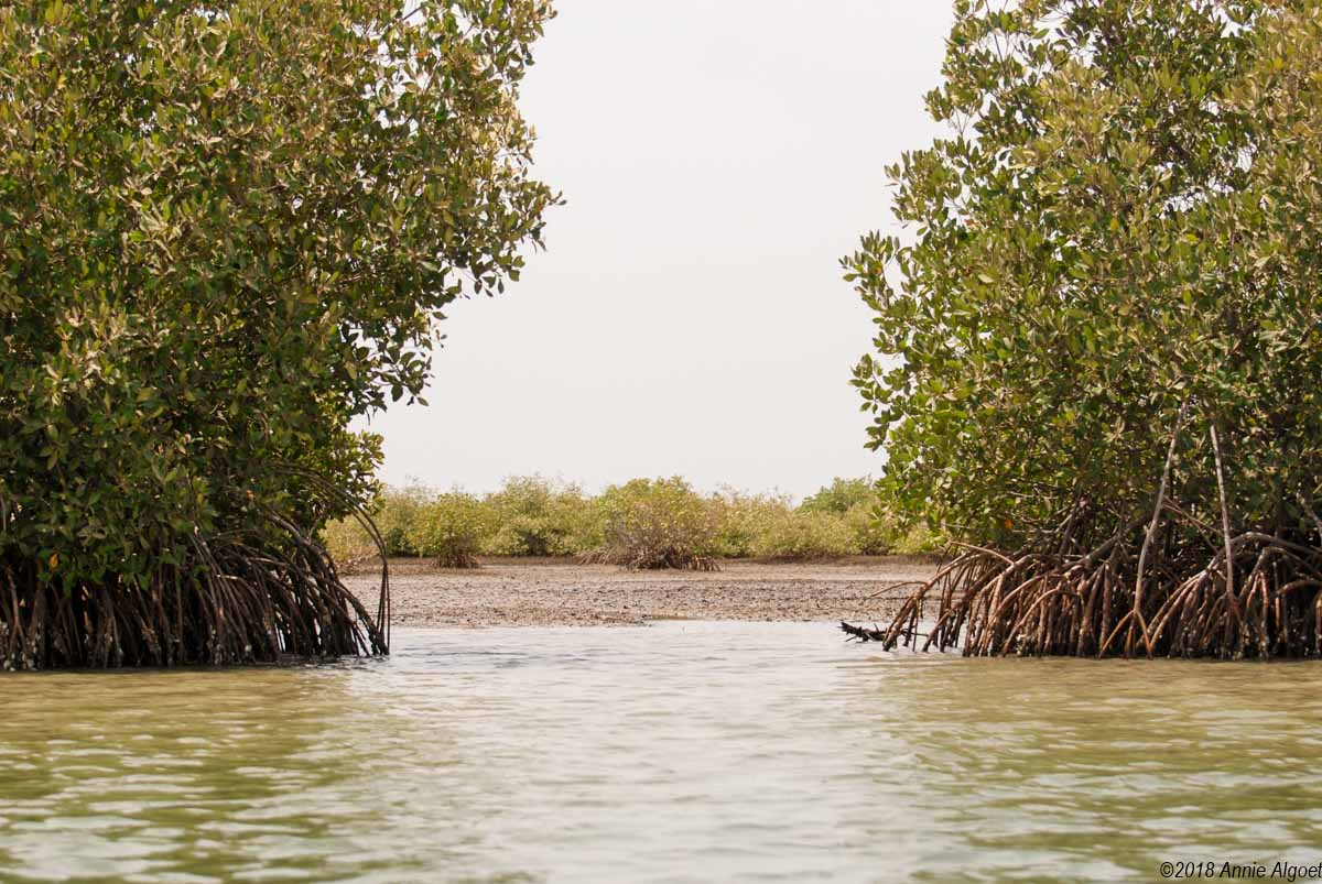 Mangroves Sine Saloum